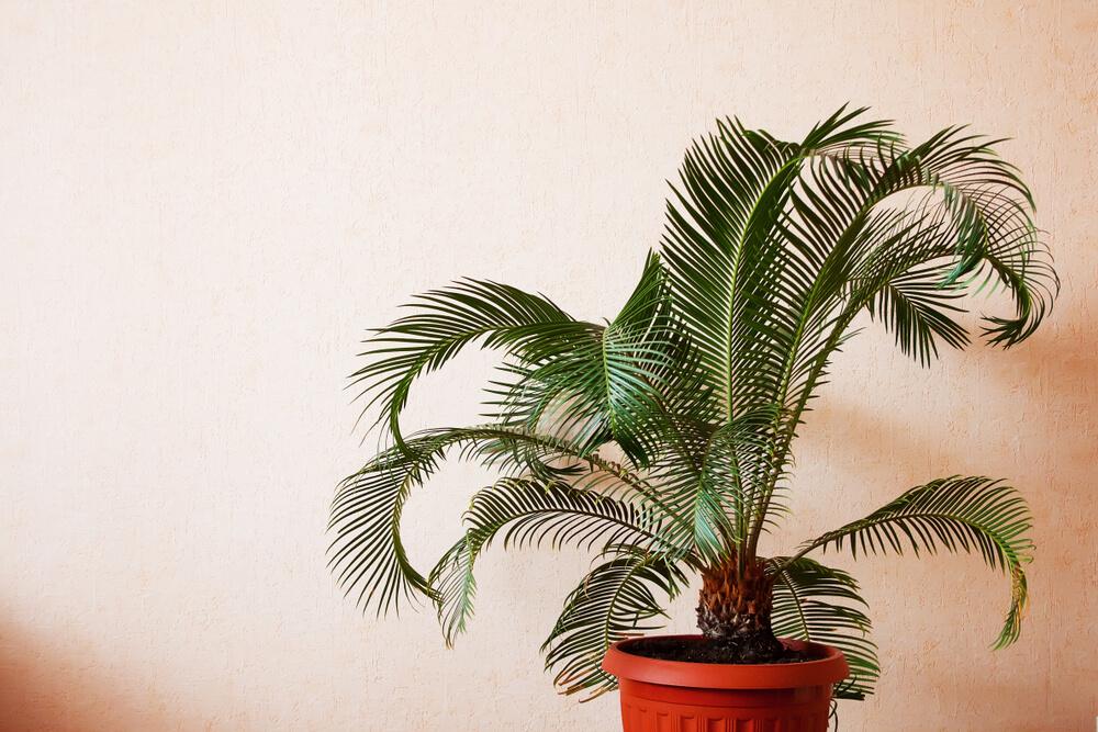 Mit Palmen gegen Nasenbluten? 1